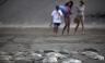 México: 300 mantarrayas aparecieron varadas en una playa en Veracruz [FOTOS]