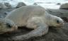 Conoce las especies que habitan en la Bahía de Paracas