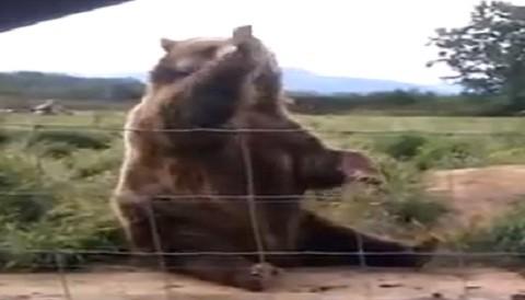 Oso responde gentilmente saludo a niña (Video)