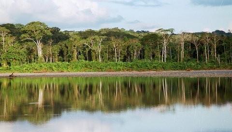 Joya de la Amazonía: Parque Nacional del Manu se prepara para recibir temporada alta de turismo en el área natural protegida
