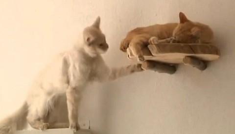 Austria: inauguran café exclusivo para gatos (video)
