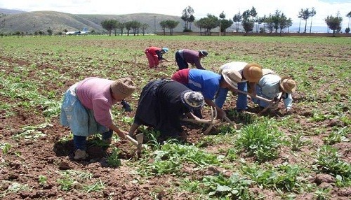 El censo agrario será incompleto para el Perú
