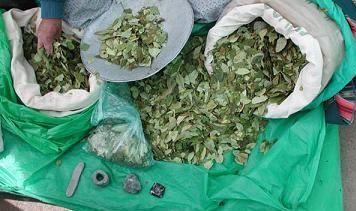 ENCUESTA: ¿Está de acuerdo con la suspensión de la erradicación de hoja de coca?