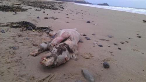 Una extraña criatura fue  encontrada en una playa de Miami,EE.UU