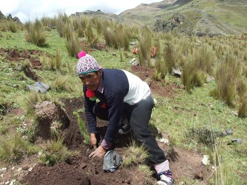 Huancavelica inician gran faena forestal regional de for Como instalar un vivero