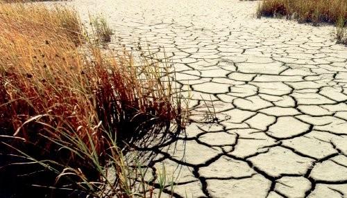 Grupo de países de América Latina y El Caribe alertan sobre avance de la desertificación en la región