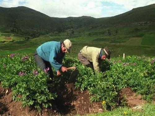 [Huancavelica] MINAG invierte más de 7 millones en 42 proyectos productivos