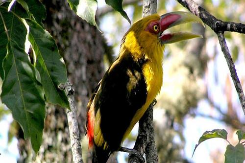 Aves con perdida de hábitat en Brasil, aún permanecen fuera de la Lista Roja de especies amenazadas