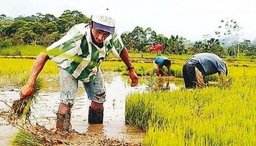 Se promulga ley que crea el Ministerio de Agricultura y Riego (MINAGRI)