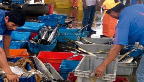 Agentes de pesca artesanal de Pucusana, Ancón y Chorrillos serán capacitados en prevención de contaminación