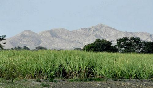 Establecen plazos para que trabajadores de azucareras compren acciones del Estado