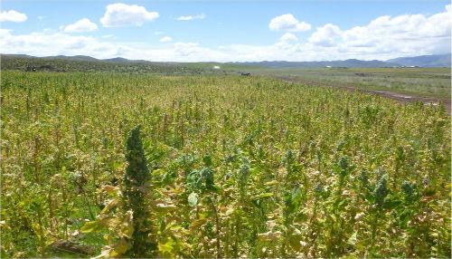 """En cada campaña agrícola se pierden cerca de 106 mil hectáreas de cultivos, debido a eventos climáticos"""