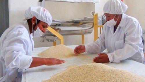 Ejecutivo propone priorizar e intensificar la investigación y exportación de quinua andina con valor agregado