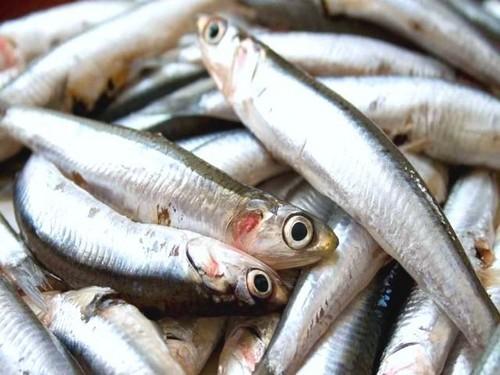Decomisan 22 toneladas de anchoveta a embarcaciones pesqueras