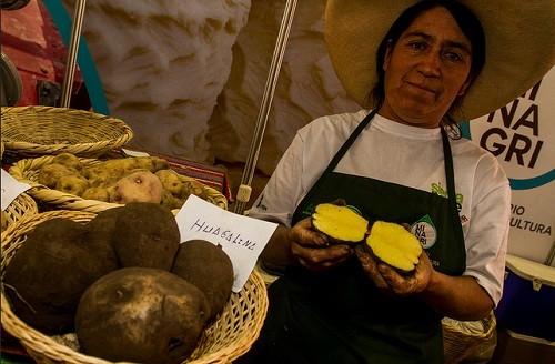 La ruta de la papa en El Gran Mercado de Mistura 2015