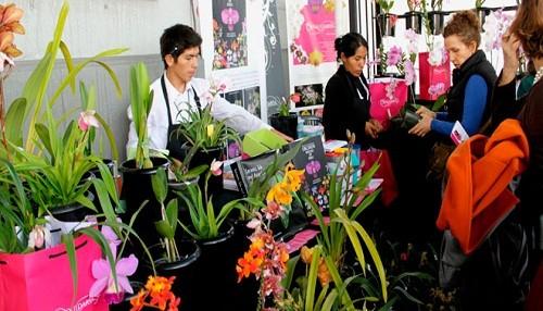 Tips para el cuidado de orquídeas