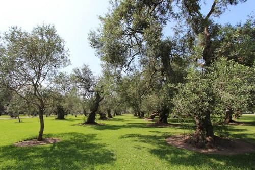 El bosque El Olivar: ¿Patrimonio Natural?