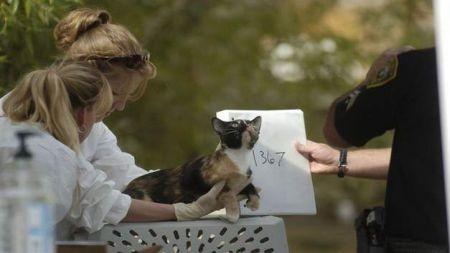 EE.UU.: Mujer vivía con 100 gatos en su casa