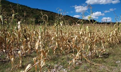 Que se declare en emergencia la agricultura y ganadería de Ayacucho