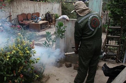 Tumbes: Brigadas fumigan más 300 viviendas en zonas afectadas por lluvias intensas