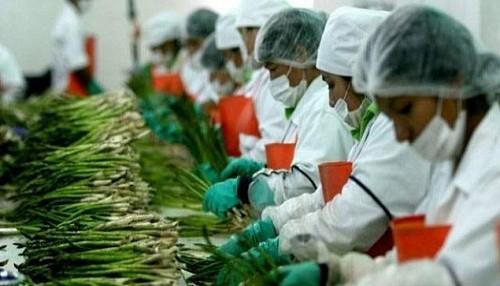 La producción nacional tuvo leve crecimiento en febrero