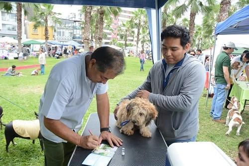 Miraflores promueve campaña de vacunación y adopción de mascotas