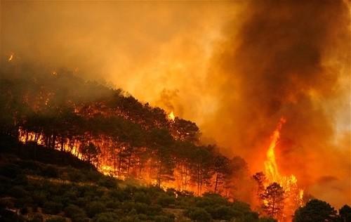 Greenpeace demanda una respuesta coordinada y global ante la nueva generación de incendios forestales