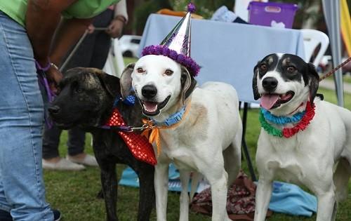 Día del perro: Miraflores celebra con campaña de adopción y concurso de disfraces
