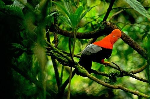 Sernanp anuncia relanzamiento de sector turístico Tres de Mayo en el Parque Nacional Tingo María