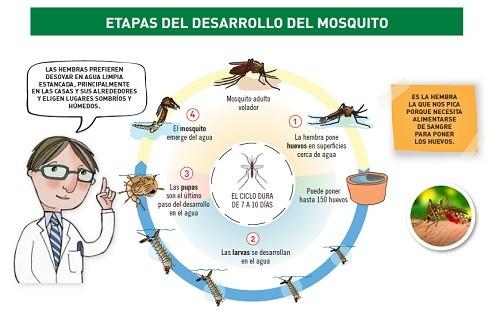Jóvenes y niños de Villa El Salvador recibirán talleres educativos para la prevención de picaduras de mosquitos