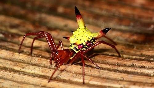 ¿Por qué esta araña se parece a la cabeza de Pikachu?