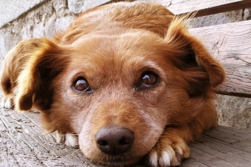 Mes de los Animales: cuidados esenciales que tu mascota debe tener en el hogar