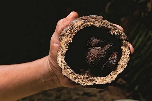 Reserva Comunal Amarakaeri se alista para campaña de recolección y comercialización de castaña 2018