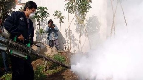SJL: Cerca de 100 viviendas serán fumigadas para acabar con plaga de mosquitos