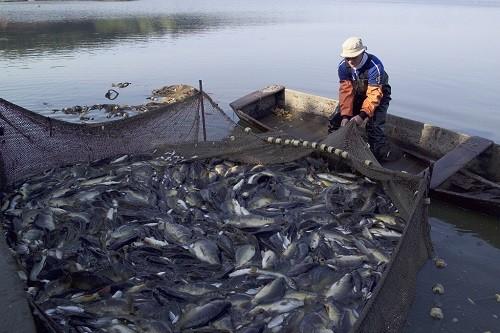 Exportaciones de pesca se recuperan