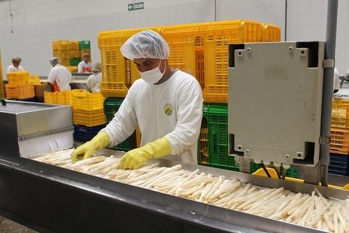 Agroexportaciones peruanas sumaron US$ 4,539 millones