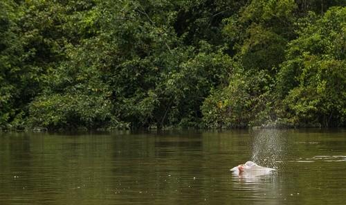Perú cuenta con una nueva área natural protegida: Parque Nacional Yaguas