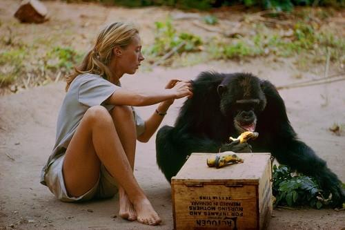 National Geographic tiene acceso exclusivo a la vida de una de las conservacionistas más admiradas del mundo en 'JANE'