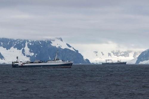 Greenpeace revela 'la lucha por la comida' entre la industria pesquera y los pingüinos y ballenas de la Antártida