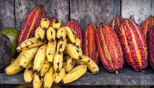 Más de 20 organizaciones de productores tendrán harán negocios en la Expoamazónica 2018