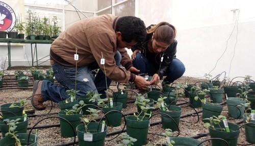 Lanzan concurso de recetas para cocinar variedades de papas resistentes a las condiciones de Marte