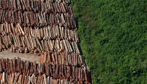 El presidente electo de Brasil amenaza la selva amazónica