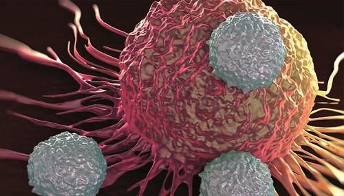 Investigadores encuentran la manera de 'activar' el sistema inmunológico contra el cáncer