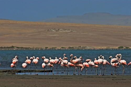 Día Mundial de los Humedales: Conoce los 10 humedales Ramsar de Perú en Áreas Naturales Protegidas