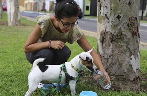 Animales de compañía no deben permanecer en techos, patios ni la calle por las altas temperaturas