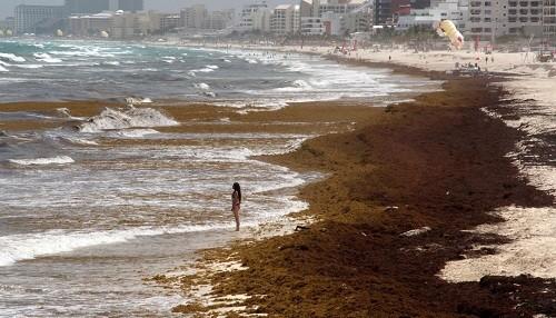 La descomposición de algas está arruinando algunas playas en México