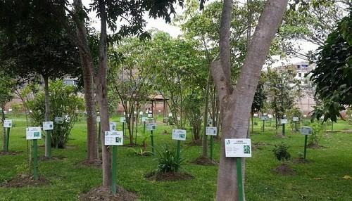 Conoce los beneficios de más de 400 plantas medicinales del Perú