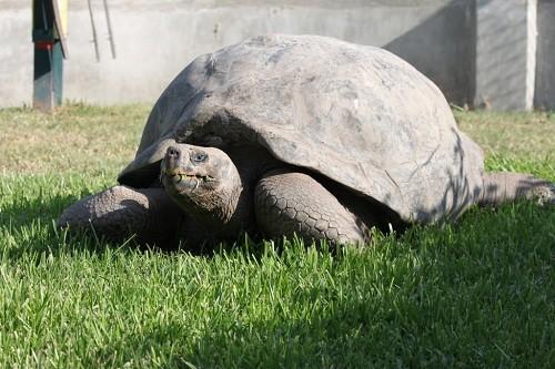Celebramos el Día Mundial De Las Tortugas en el Parque De Las Leyendas