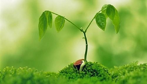 Las plantas ahora se extinguen 500 veces más rápido que la tasa 'natural'
