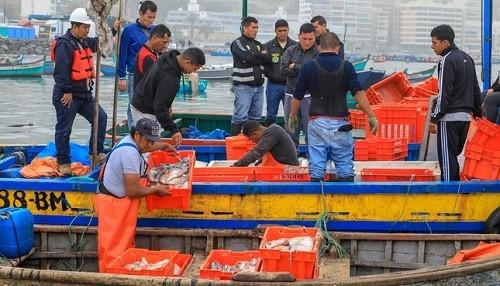 Ministerio de la Producción decomisó 3 toneladas de pota pescada ilegalmente en Lima